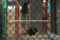 Chainlink Fence/Sports Field Fence/ Security Fence/Safe Guard Fence/Chain Link Wire Mesh